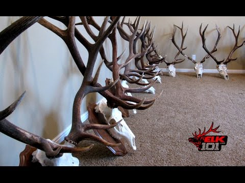 DIY European Skull Mount for Elk