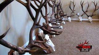 DIY European Skull Mount for Elk