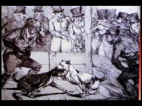 O Pit Bull - documentário (completo em português)