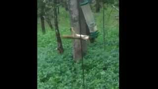 Spinning Squirrel