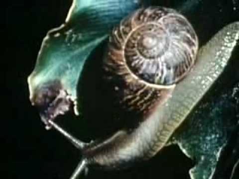 Snails Backyard Science Clip Youtube