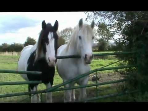 HORSES - Ceffylau, Pferden, Cavallos, Paarden, Chevals - YouTube