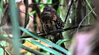 Birds of Malaysia in 2011 (8-4)