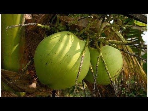 îles Samoa : exemple d'une conversion en bio réussie | kapacking.club
