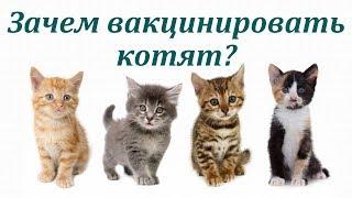 Зачем проводить вакцинацию котят? Заболевания котят до года