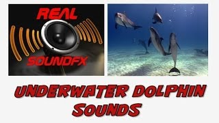 Dolphins underwater sound effect - realsoundFX