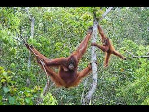 Borneo and Malaysia: World Challenge