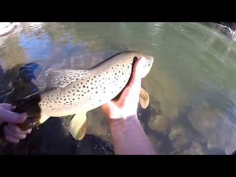 Truckee River Fishing