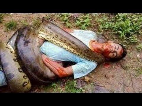 Man VS Snake (West-Bengal,kalyani city)😡