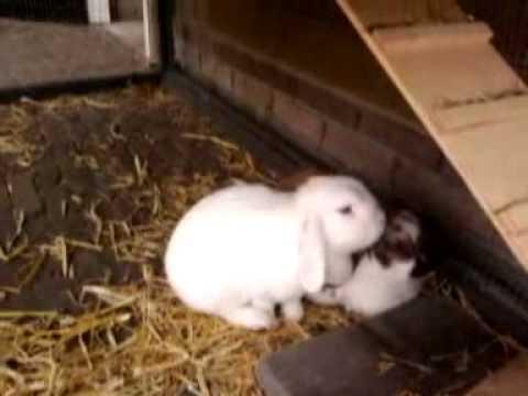 wippende konijnen