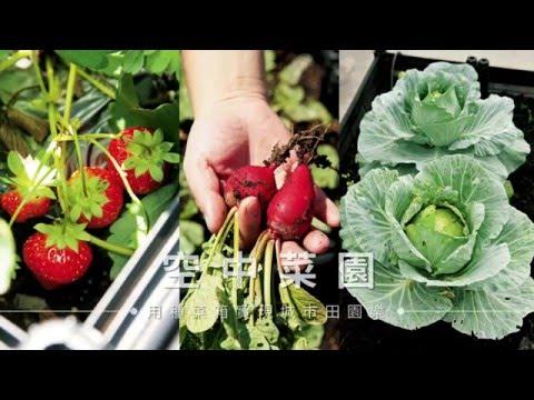 【種菜】用種菜箱實現城市田園樂!陽台、窗台、頂樓都能豐收葉菜瓜果!