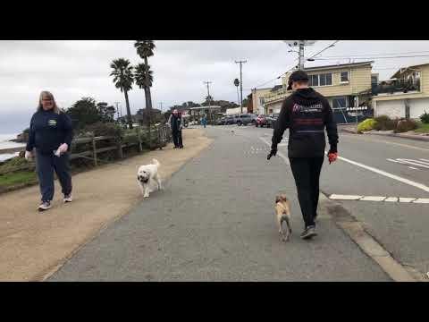 Whippet Chihuahua Mix, Winnie | Dog Training in Santa Cruz, CA
