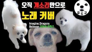 Believer 구독자 강아지 리믹스 ( 원곡 : Imagine Dragons)