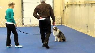 Woobie - Pre-novice Obedience 1st Leg (heel Pattern And Recall)