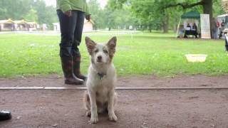 Приют домашних животных Бирюлево izpriuta.ru