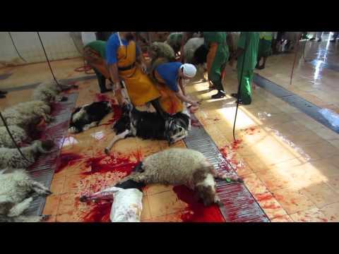Sheep/lamb slaughter.......abattoir :-)