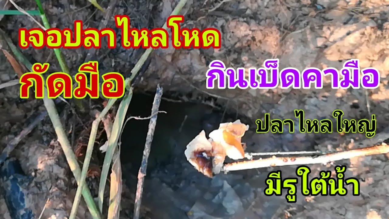 ตกปลาไหลโหด กัดมือ กินคามือ รูใต้น้ำ ตกปลาไหลในรู ตกปลาไหลใหญ่ ใส่เบ็ดปลาไหล วิธีตกปลาไหล