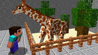 MINECRAFT - WHY NOOB IS IN THE ZOO?