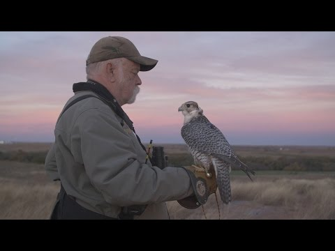 THE FALCON HUNTER - TRAINING FALCONS WITH DRONES | X-STAR PREMIUM