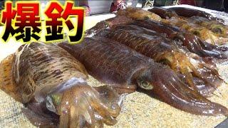 魚船に乗ったら2kg超えのイカが狙えるはず!大作戦#2 thumbnail