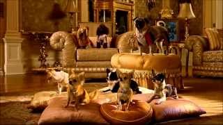 Beverly Hills Chihuahua 2 (2011) - Trailer