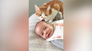 Baby and Cat Fun and Fails   Funny Baby Video