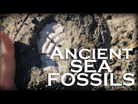 Hunting Ancient Sea Fossils In The Desert Of Eastern Montana