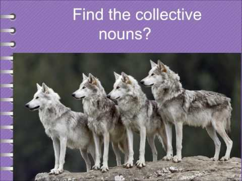 Collective nouns for animals-IEO,IGKO