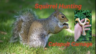 Catapult hunting grey Squirrel