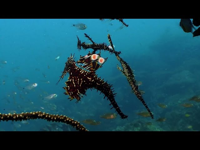 Diving around Long Island in the Andaman Islands (India) - Clip 2