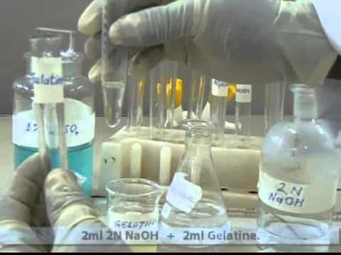 Biuret's Test - Qualitative Test in Proteins