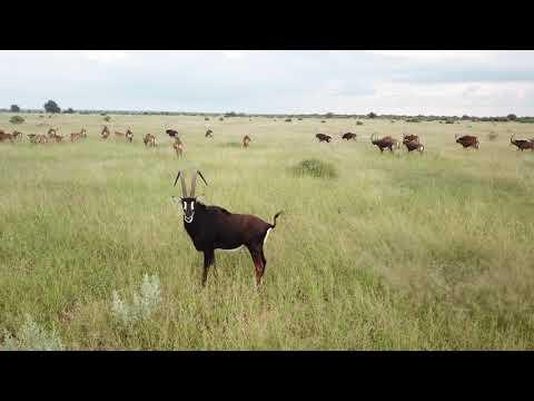 Gateway To Africa Safaris Sable Antelope