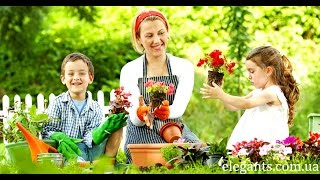 Семена цветов, растений и овощей купить онлайн в интернете!(, 2015-08-08T15:00:07.000Z)