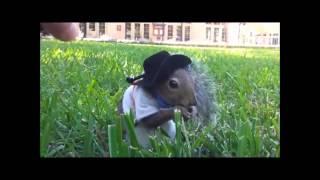 Смешное видео. Приколы про людей и животных.