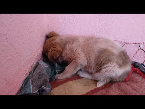 Puppy was so scared that he kept  facing the wall