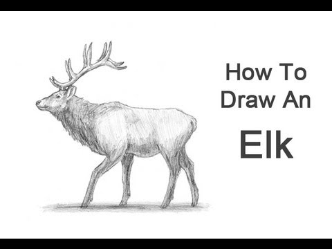 How to draw an elk youtube how to draw an elk thecheapjerseys Images