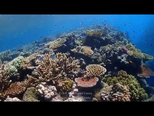 Great Barrier Reef 2020 Jul