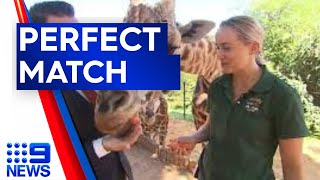 Perth Zoo's wildest dating game begins I 9News Perth