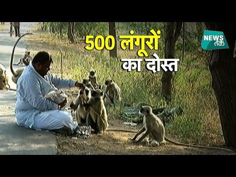 लंगूरों को 1700 रोटियां खिलाने वाले इस आदमी की कहानी सुनी?    News Tak