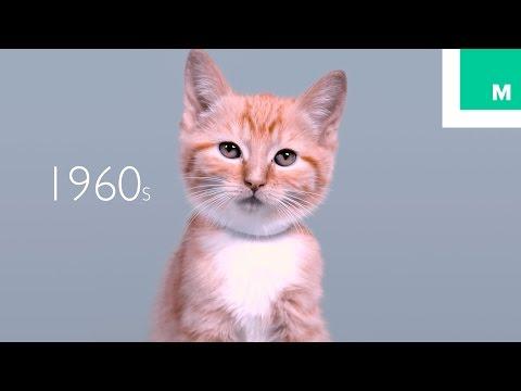 100 Years of Kitten Beauty in 60 Seconds