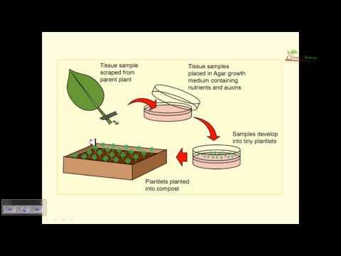 Plant tissue culture basics - YouTube