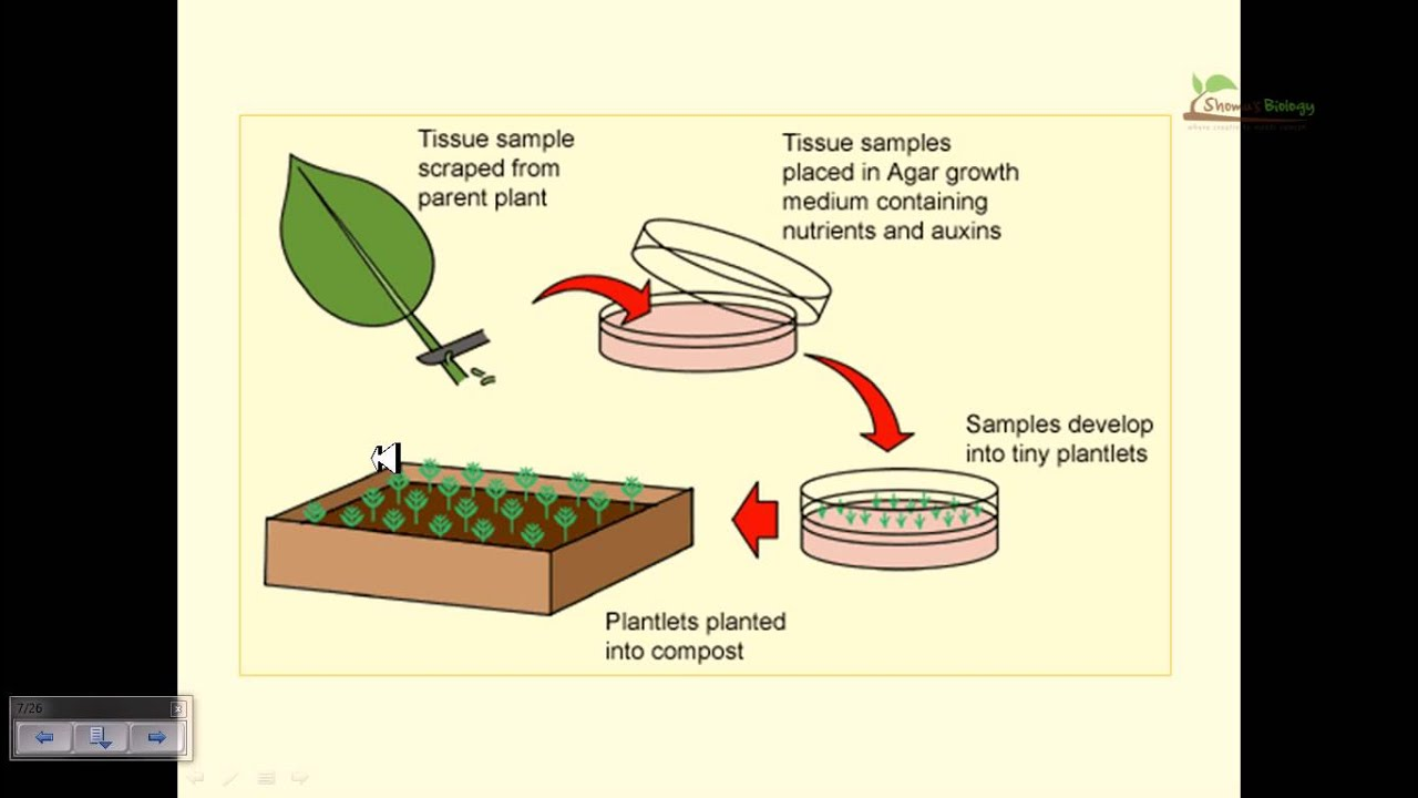 Tissue Culture & Sampling - cover