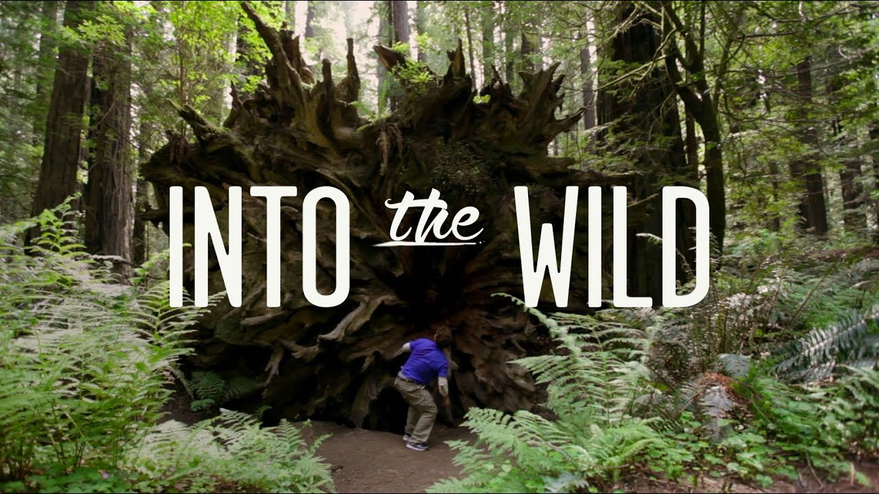 into the wild  tempest freerunning  redwood national