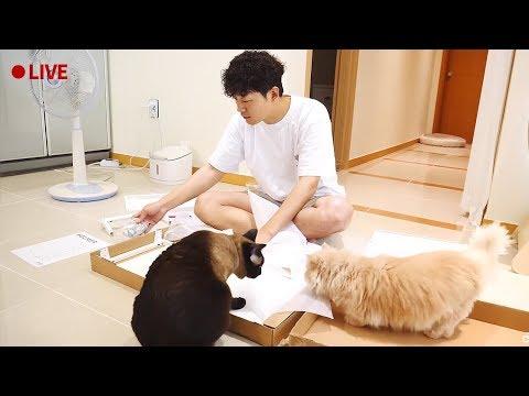 [2019.07.27 LIVE] 가구 조립을 방해하는 고양이들 실황