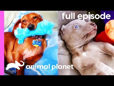 The Search For America's Cutest Dog (Full Episode)