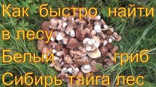 Поход в лес белые грибы ищем по запаху 17 июля 2017 белый гриб легко найти тайга природа выживание