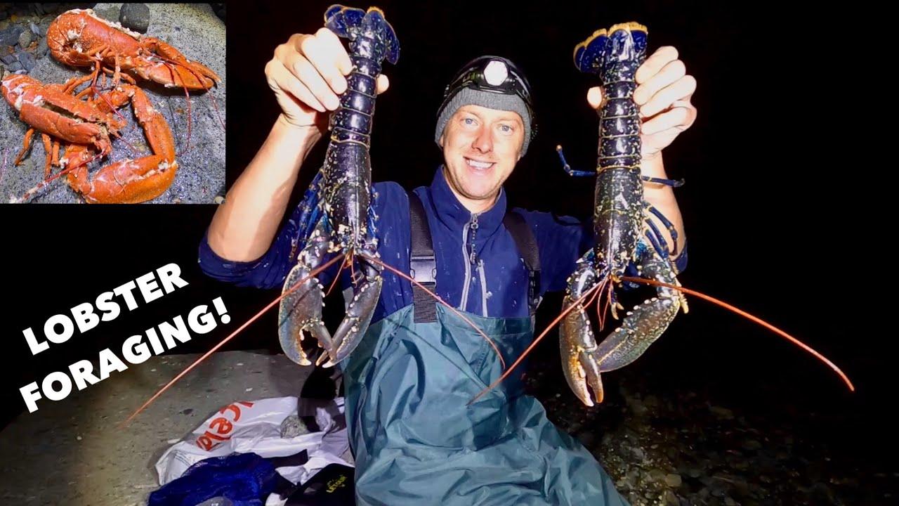 LOBSTER FORAGING - Steamed Garlic & Chilli Lobster , A Great Night COASTAL FORAGING !