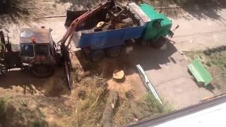+30250 Трактор против дерева.Кто победит? Смотри сможет трактор погрузить дерево?