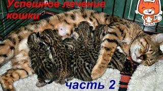 Кошка выздоравливает. Бенгальским котятам 10 дней.Счастливый финал. Часть 2