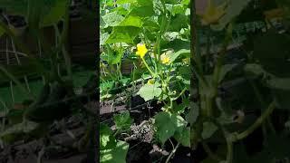 Мини огородик хобби переросло в любовь к земледелию